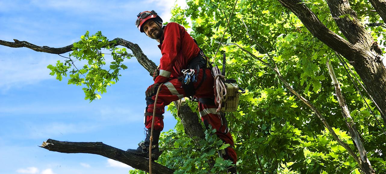 Jobsuche - Mann auf Baum